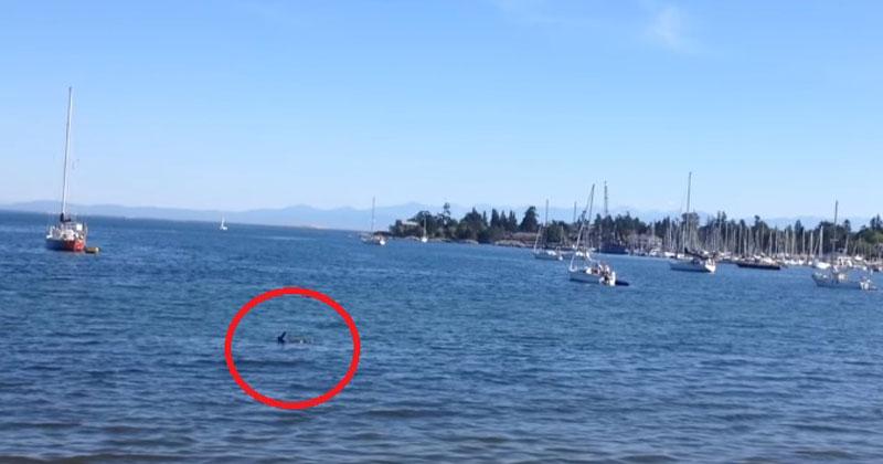 Женщина заметила, как что-то плывет по воде, и тут же схватила камеру. Но через минуту это «что-то» подобралось вплотную к ее мужу!