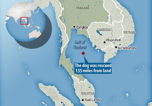Cпасли собаку в море за 217 километров от берега Новости, Собака, Море, Таиланд, Спасение, Позитив, Длиннопост