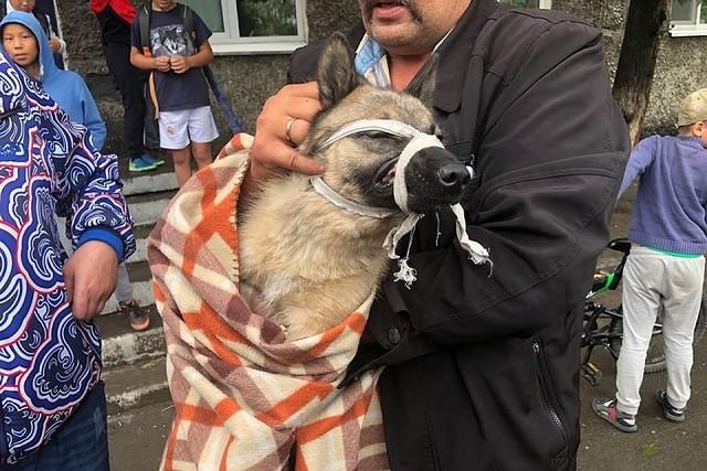 В Туве освободили пса, застр…