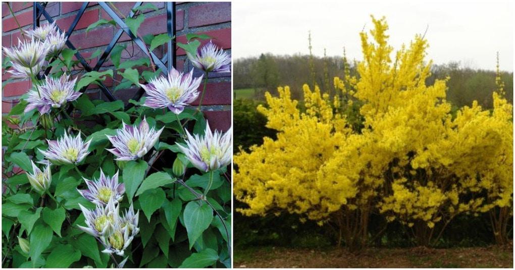 Лучшие декоративные растения, которые обязательно должны занять место в саду