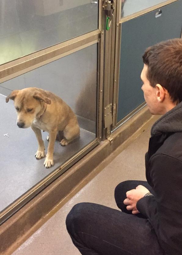 """-""""Взяли пса из приюта. Разница между фотографиями в один день..."""""""