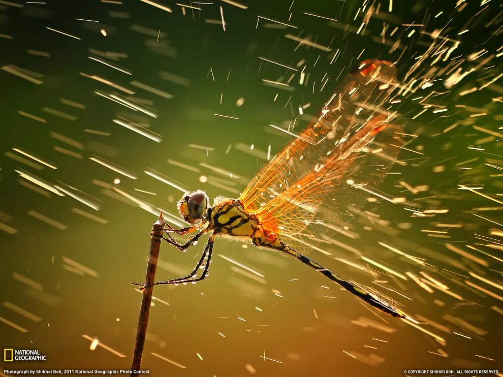 263 990x742 Лучшие фото National Geographic за декабрь 2011