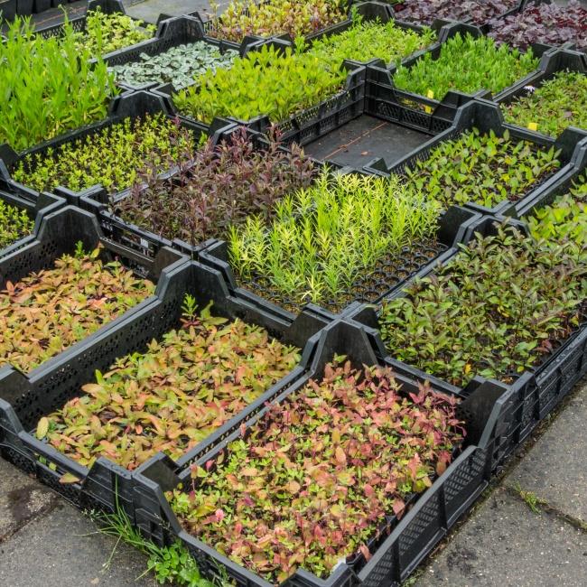 13 оригинальных идей для дачи, о которых мечтает любой садовод