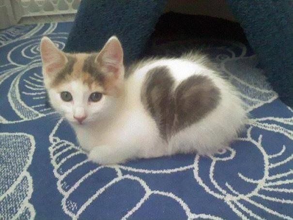 Котёнок с сердечком