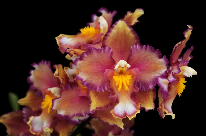 5230261_orhideya_dop_plus_7 (700x463, 150Kb)