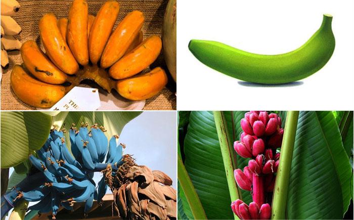 10 самых редких и необычных бананов