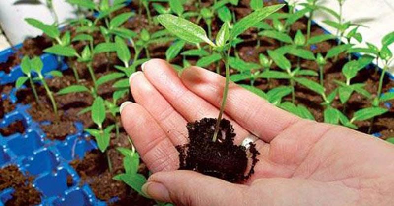 Февраль — самое время сажать рассаду! Выбираем овощные культуры