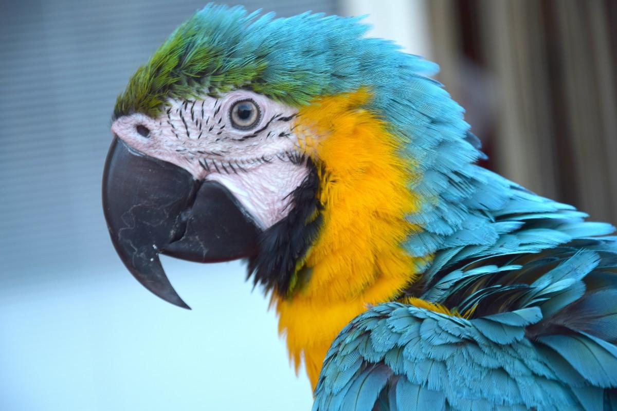 В Лондоне попугай обматерил …