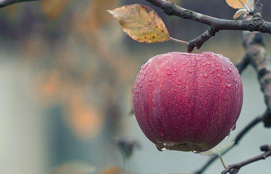 Почему важно есть яблоки?