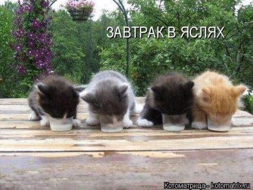 Свежая котоматрица на Юморине