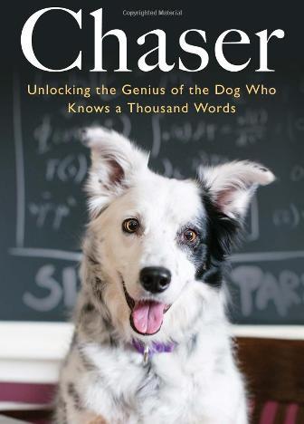 Пес, который понимает тысячу слов
