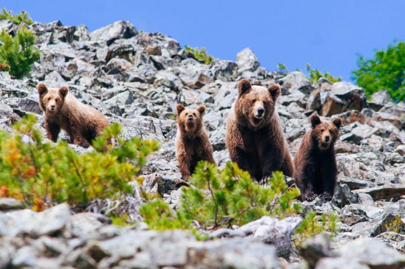 Дикие животные на снимках Ивана Кислова Иван Кислов, дикий мир, живность, животные, красота, природа, фотограф