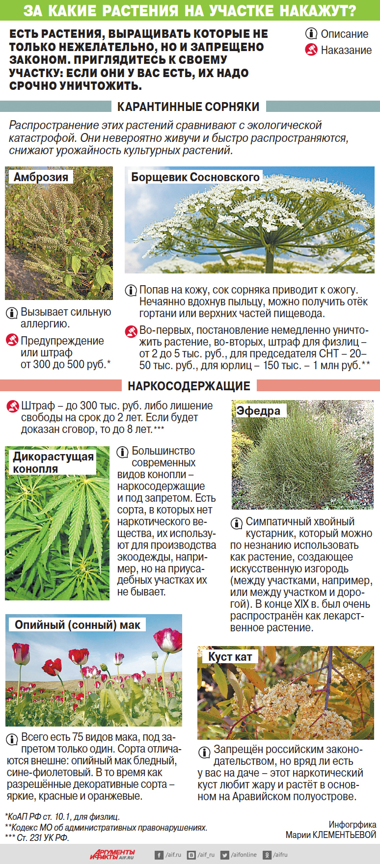 За какие растения на участке накажут?