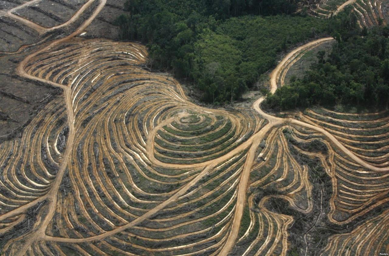 Пальмовое проклятие набирает обороты