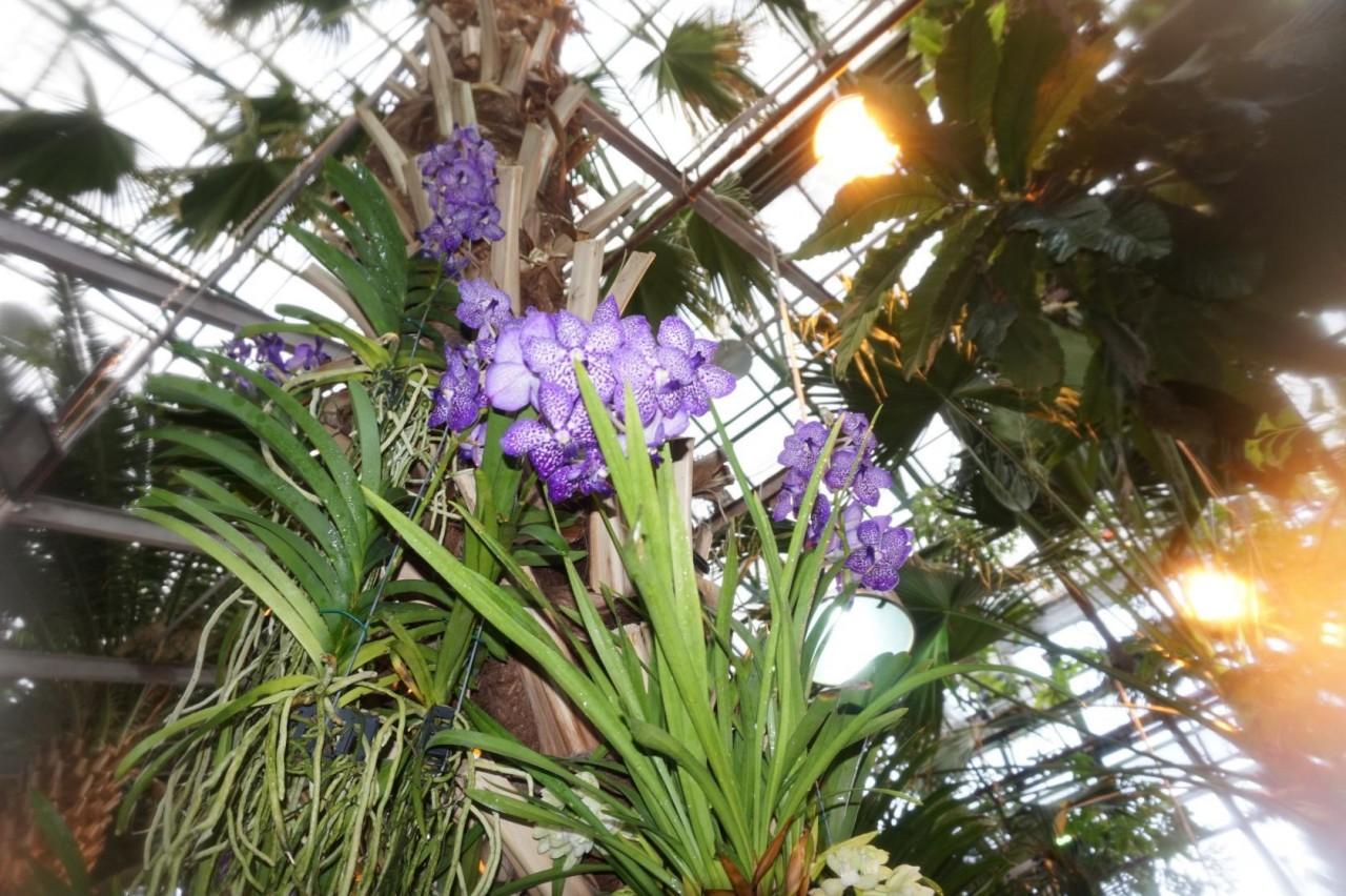 Орхидеи в Аптекарском огороде