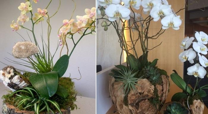 композиции из орхидей в горшках