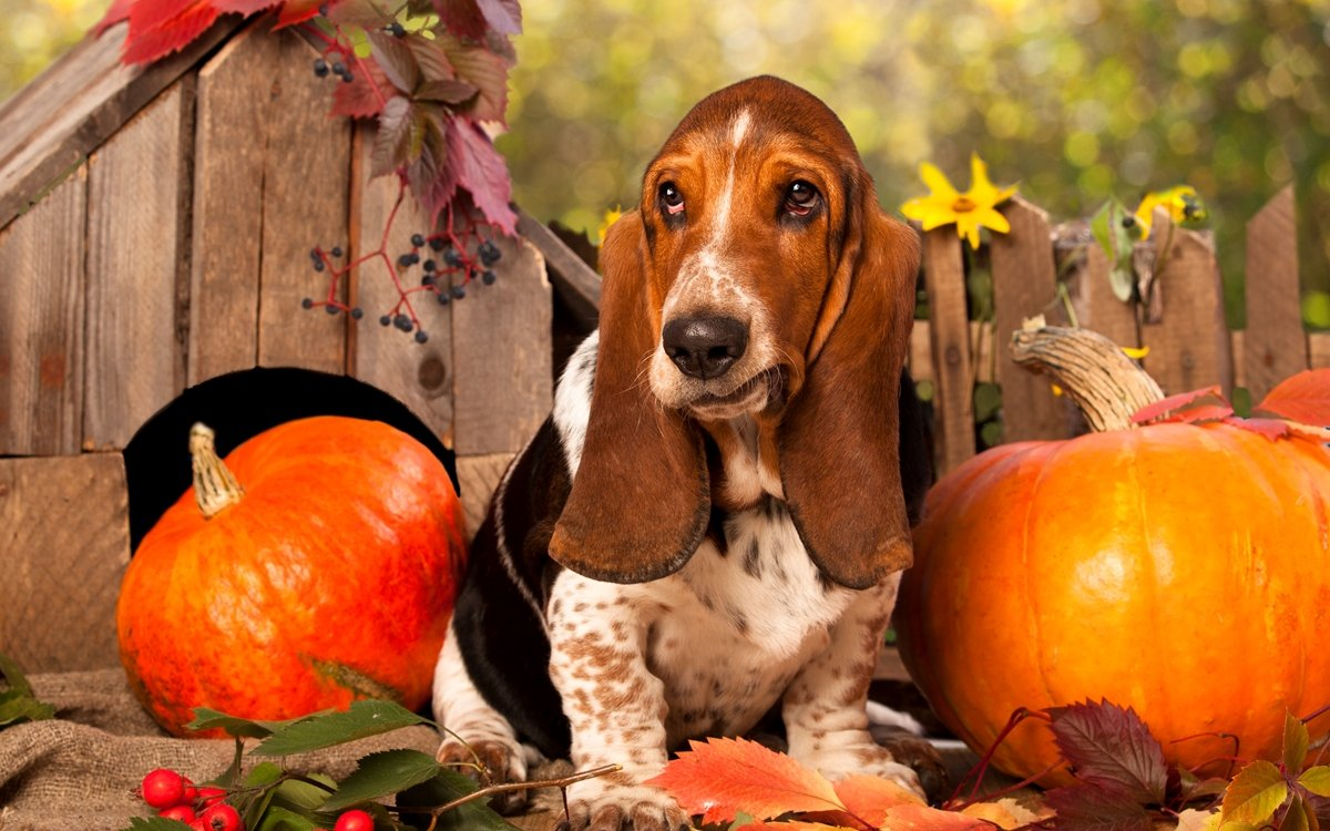 : собака в саду осенью, ошибки дачника