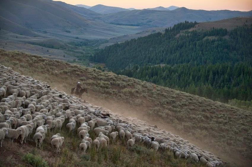 terraoko 2015012702 5 Праздник Трейлинг овец в Айдахо.
