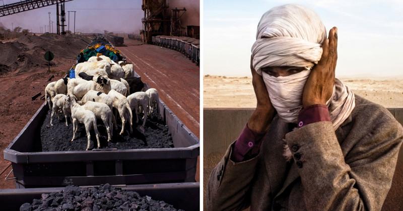 Безумное путешествие через Сахару с овцами и железной рудой