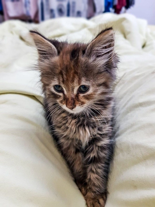 Мужчина взял котенка с улицы, а через день отнес его назад. Малышка осталась одна, испуганная и голодная