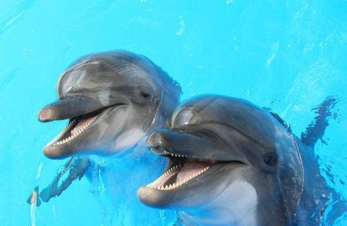 """Как дельфины-патриоты """"отказались сотрудничать с оккупантами"""" в Крыму"""