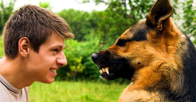 Укусы каких собак наиболее болезненны и опасны для людей?