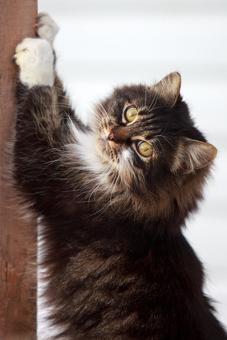 КОШКИН ДОМ. Как отучить кошку от вредных привычек