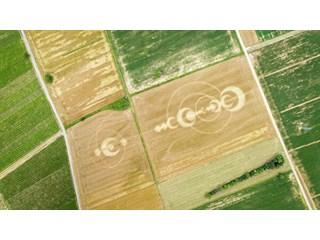 Ученые объяснили, откуда на полях появляются таинственные круги