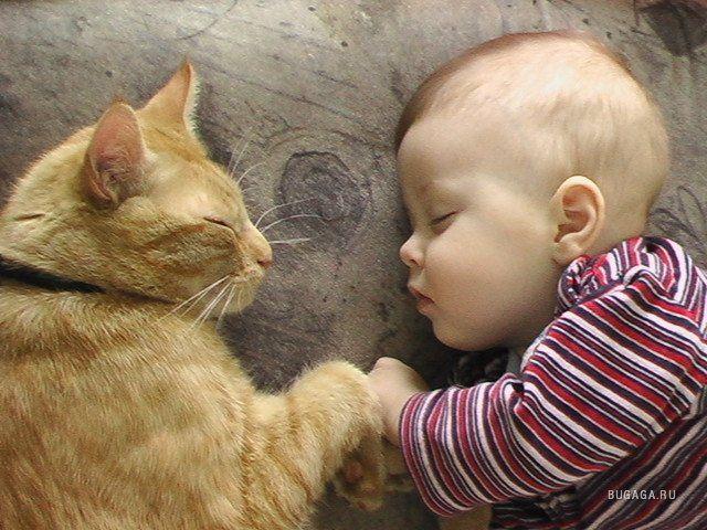 кошки, дети, дом