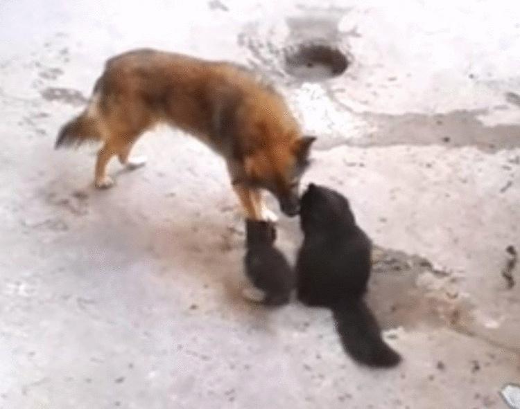 Кошка привела котят в гости …