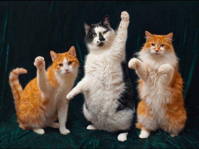 Это была настоящая семейная кошачья драма!