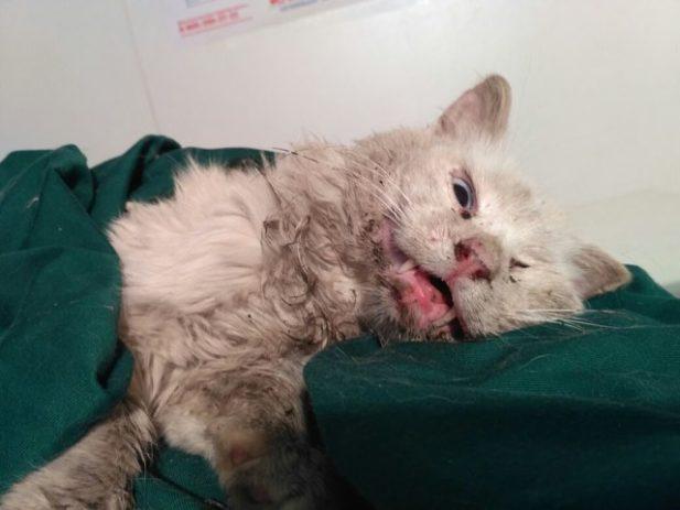 Он сидел на пеньке и ждал! 4 года любящий кот надеялся, что хозяева вернутся, а теперь…