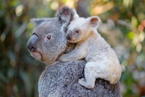 Удивительные фотографии животного мира