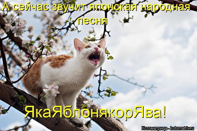 Котоматрица: А сейчас звучит японская народная песня ЯкаЯблонякорЯва!