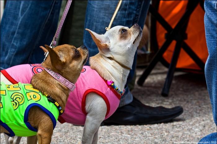 Выставка собак или дог-фрик-шоу