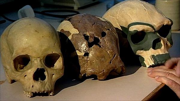 Так с кем же скрещивался Homo Sapiens?