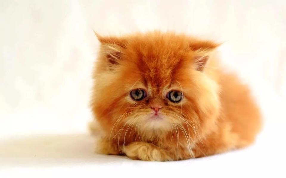 Нашего Кота мы узнали сразу.…