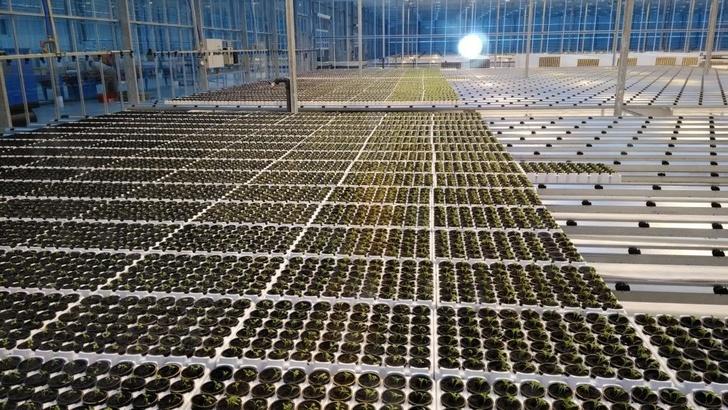 Сделано у нас: в феврале 2018 в России открылось 18 предприятий агропрома