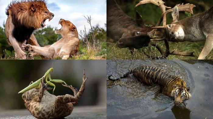 Фотографии животных..