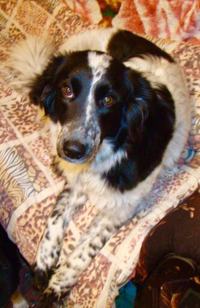 До сих пор собака сжимается в комочек от резких движений. Но ее жизнь уже изменилась благодаря доброй девушке
