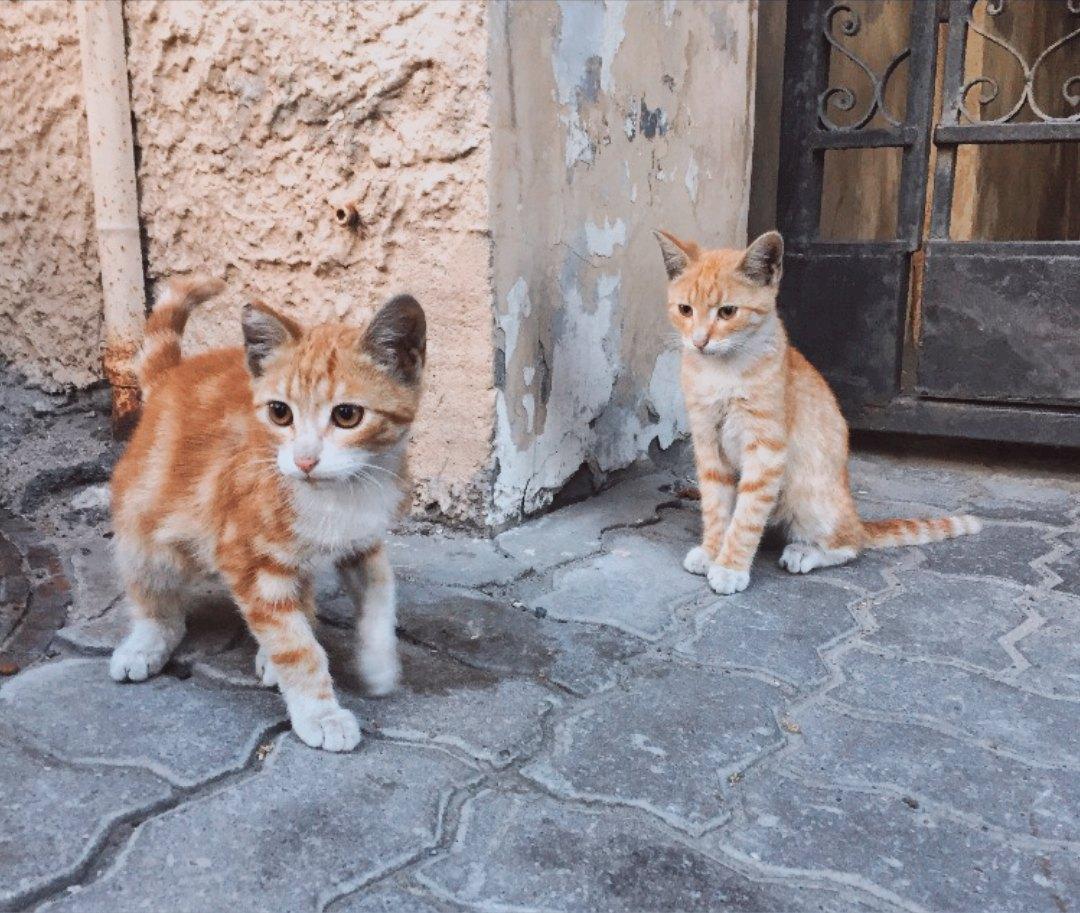 Приближаются холода, помогите, пожалуйста, спасти их!