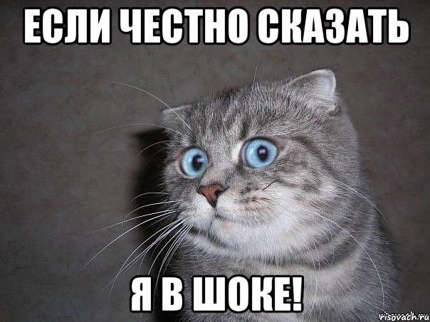 Кремль купил книг на полмиллиона рублей: среди них литература про котов и руководство по лжи