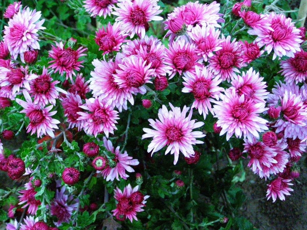 Цветы на даче: создание цветника своими руками — 75 фото
