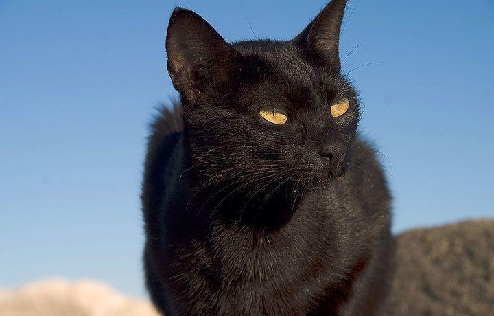 Приметы и поверья про кошек