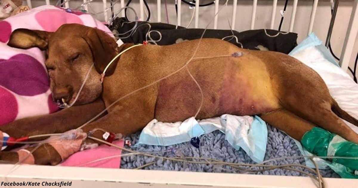 Она потеряла собаку, которая съела её пирожные, и предупреждает всех собаководов