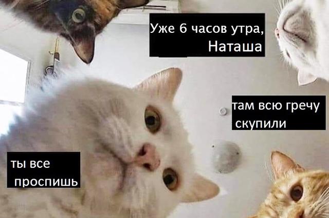 Анекдот Про Кота И Гречку