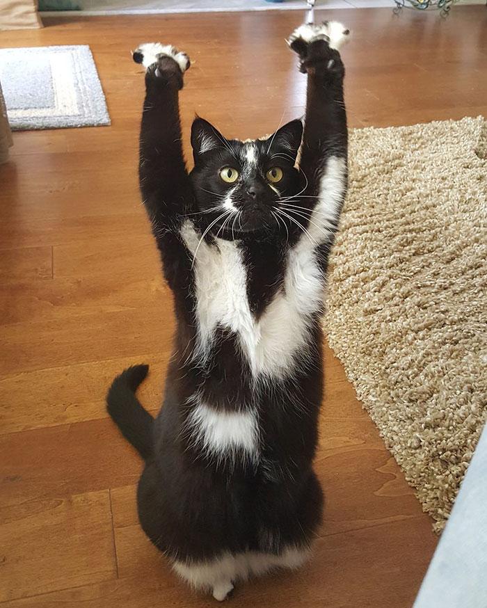 Эта кошка задирает передние …