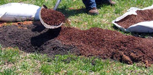Почва в грядке под клубнику