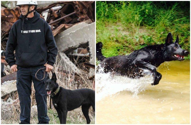 Собака спасла хозяина от смерти, хотя сама могла погибнуть