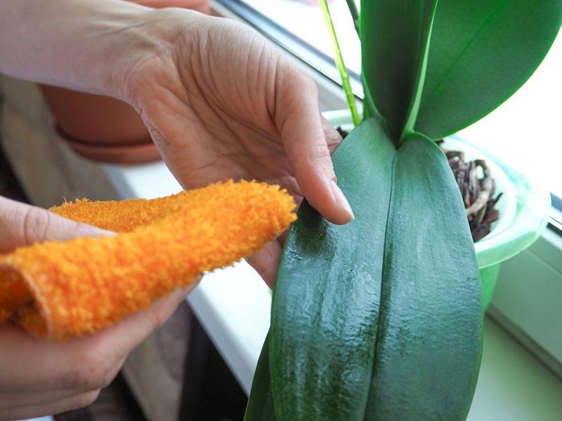 корни орхидеи гниют что делать